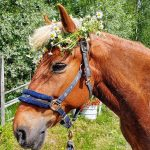 Hevoset luovat hyvinvointia – Kunnan tulisi huolehtia hevostoiminnan edellytyksistä ja tarpeista
