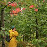Suomalainen metsäsuhde yritetään saada Unescon kulttuuriperinnön luetteloon – jokainen voi allekirjoittaa tukilomakkeen