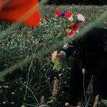 Auringonkukkapelto tai kukkaniitty Ylöjärvelle? Kukat elävöittäisivät kaupunkiympäristöä ja auttaisivat pörriäisiä