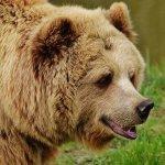 """Oliko Vuorentaustassa oikeasti karhu? """"Se on täysin mahdollista"""", sanoo riista-asiantuntija"""