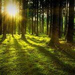 Metsä ja suomalaisuus – toisistaan erottamattomat
