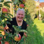 Ylöjärven oma omenapuu Ahvenanmaalla tuotti noin 10 kilon sadon – Omenamehua voisi antaa vaikka palkinnoksi?